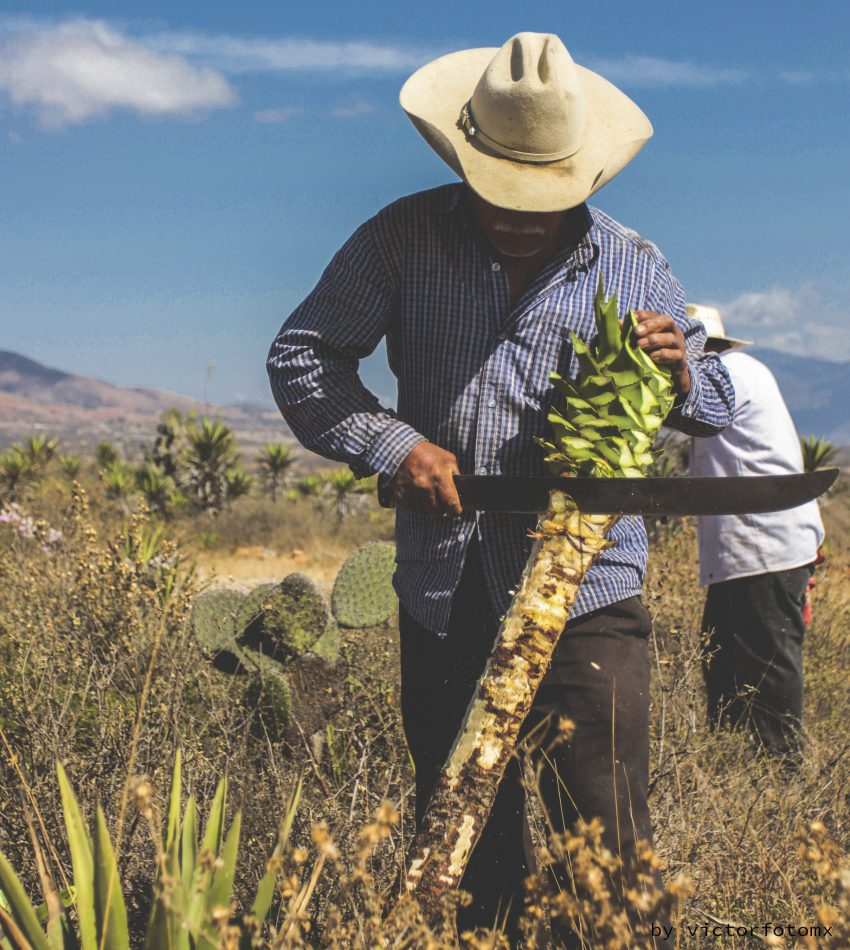 Studio-unseens-about-mexico-mancutagave